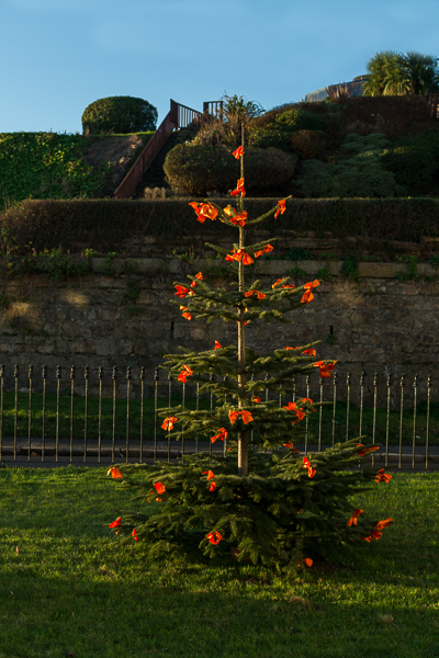 Christmas Tree at Martello Terrace
