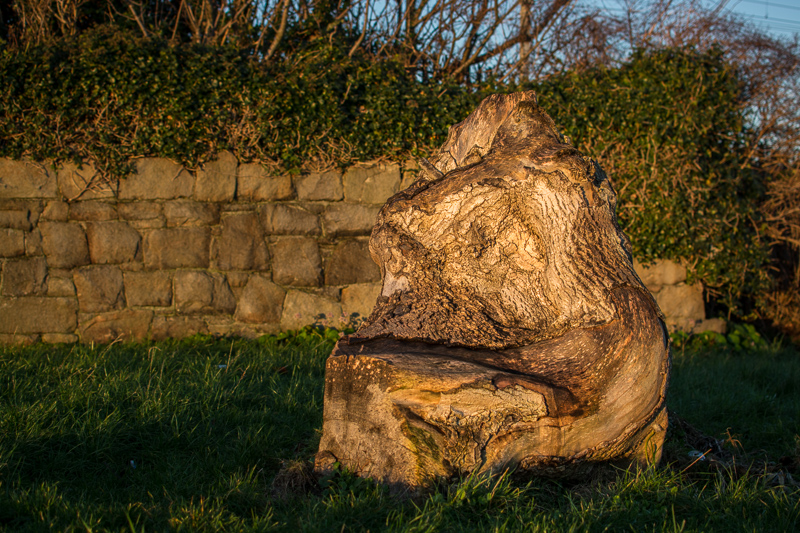 Old tree trunk at Bray Harbour - looking a bit like Jabba The Hutt!