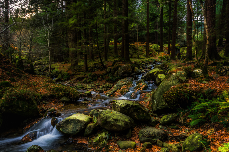 Poulanass River, Glendalough, Co. Wicklow
