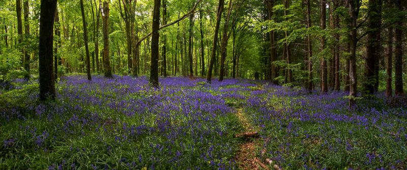 Moore Abbey Wood, Monasterevin, Co. Kildare