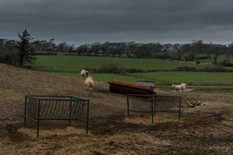 Wicklow Sheep - 08-03-2014