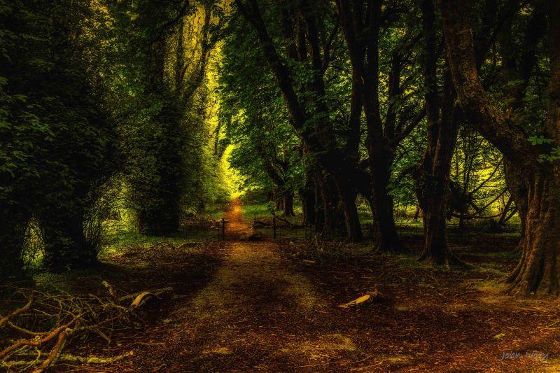 Muckross Abbey - 02-05-2014 #21