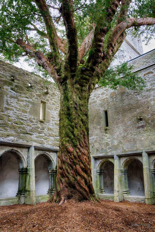 Muckross Abbey - 02-05-2014 #9