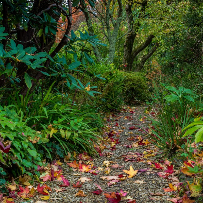 Mount Usher - 23-10-2014 #11