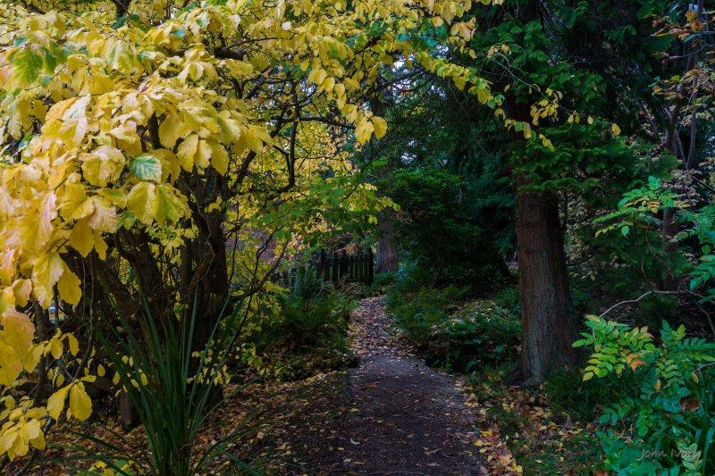 Mount Usher - 23-10-2014 #6