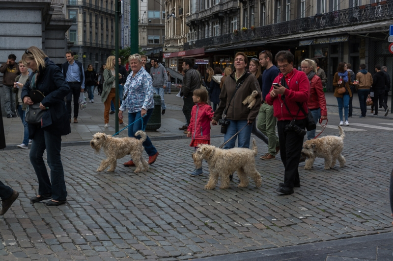 Brussels Blog #10